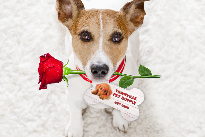 Custom shaped gift cards for a pet store